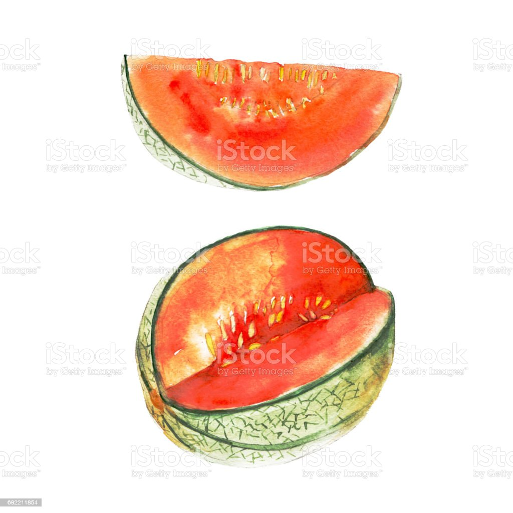 The magenta melon isolated on white background, watercolor illustration fruit set in hand drawn style. vector art illustration