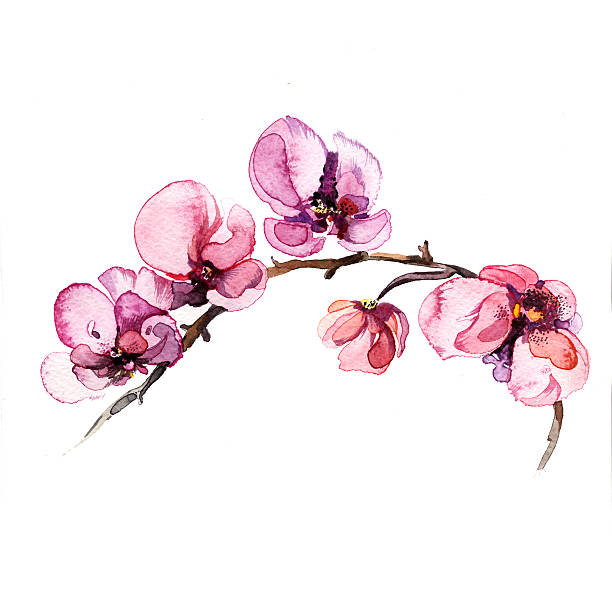 the orchid flowers watercolor isolated the watercolor flowers orchid isolated on the white background orchid stock illustrations