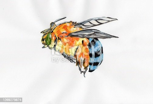 The Australian native bee with acrylic painting on the paper.