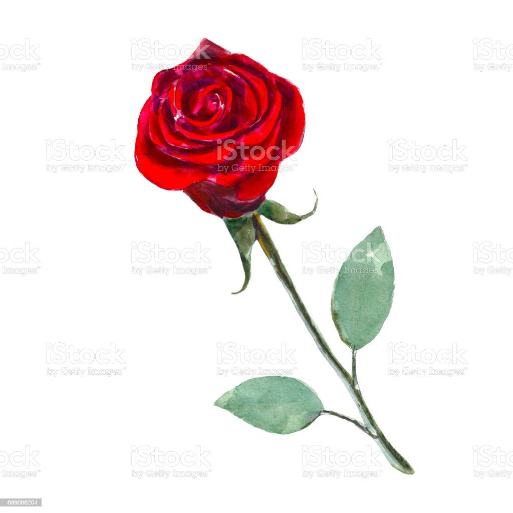 Fantastisch Rose Blume Anatomie Zeitgenössisch - Menschliche ...