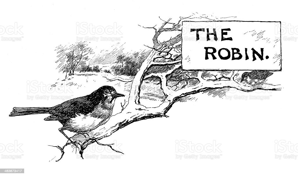 The Robin royalty-free stock vector art