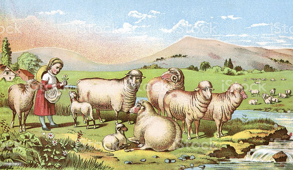 The Sheep Run royalty-free the sheep run stock vector art & more images of 1880-1889