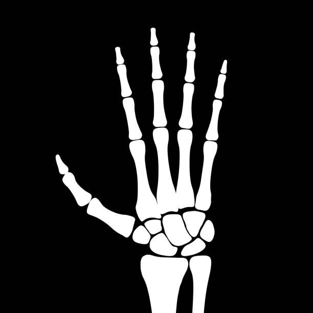 The skeletal hand in black background. Illustration. vector art illustration