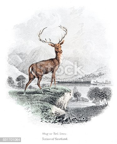 The Naturalist Library by Sir William Jardine VolXXI Mammalia (Deer, Antelope, Camels)