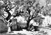 The Tasso Oaks in Rome
