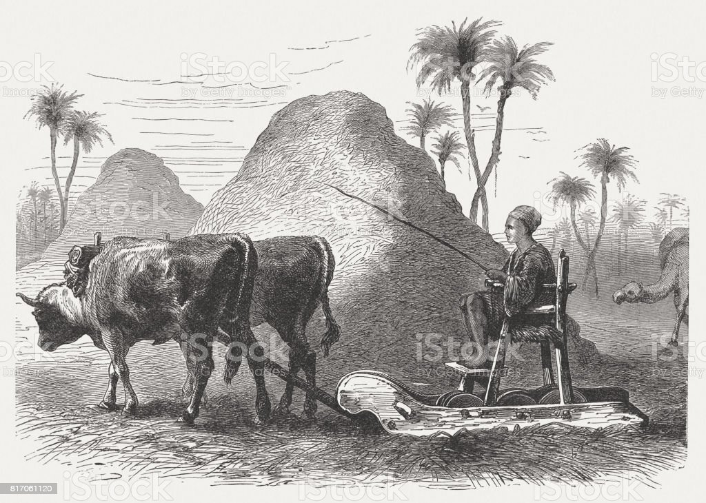 The Threshing carriage (Deuteronomy 25, 4) , wood engraving, published 1886 vector art illustration