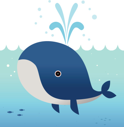 The whale is blowing