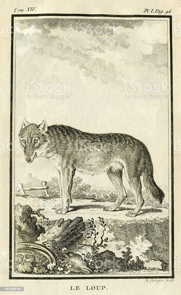 The Wolf vector art illustration