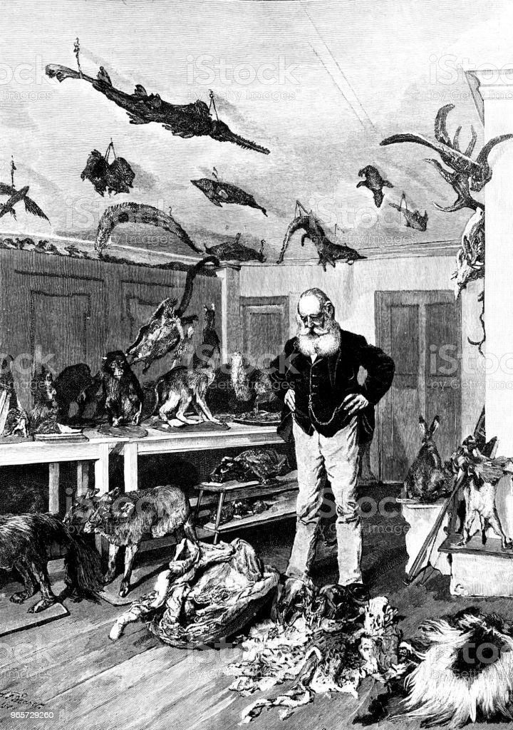 The zoologist in his study, with prepared animals hanging everywhere - Royalty-free 1890-1899 stock illustration