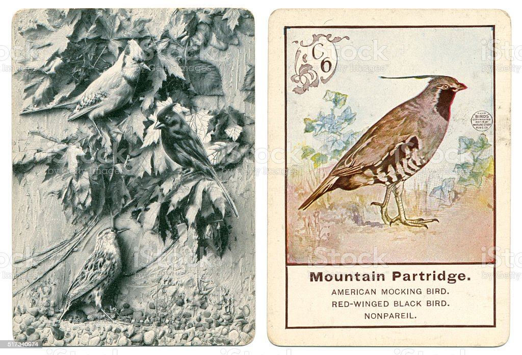 Mountain Partridge from Parker Brothers Game of Birds 1900 vector art illustration