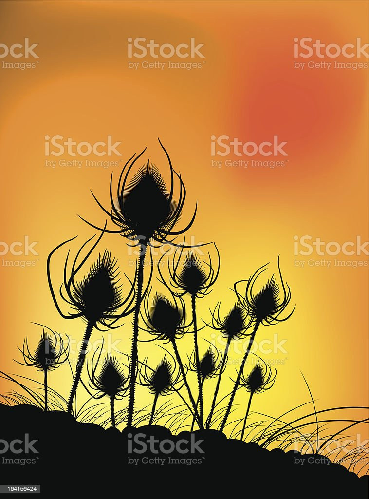 Thistles at dusk royalty-free thistles at dusk stock vector art & more images of autumn