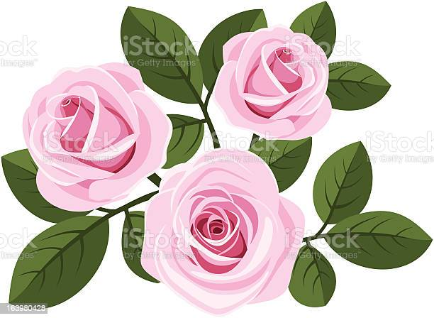 Three pink roses with leaves on white vector illustration illustration id163980428?b=1&k=6&m=163980428&s=612x612&h= 70m6lr8vse393r6irmbamatceq92zenlnfygztix9y=