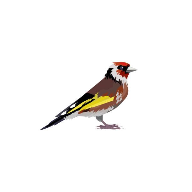 ilustrações de stock, clip art, desenhos animados e ícones de thrush bird illustration - song thrush