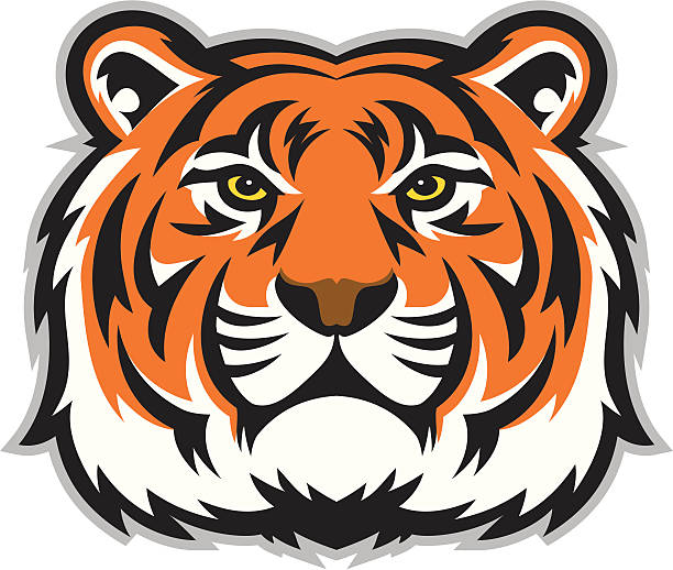 tiger face - tiger stock illustrations, clip art, cartoons, & icons