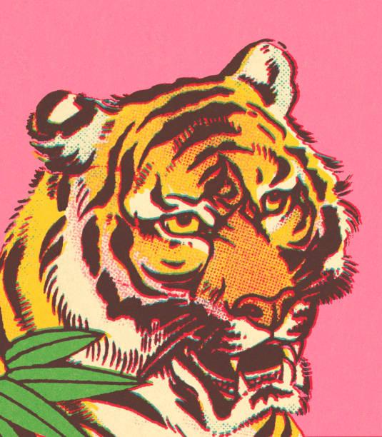 illustrations, cliparts, dessins animés et icônes de tigre - tigre