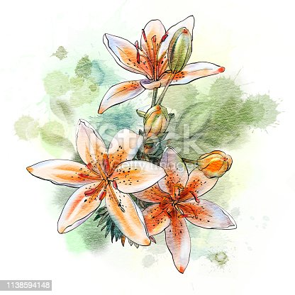 Watercolor  flowers isolated on a white background. Tiger lily. Hand-drawn illustration.