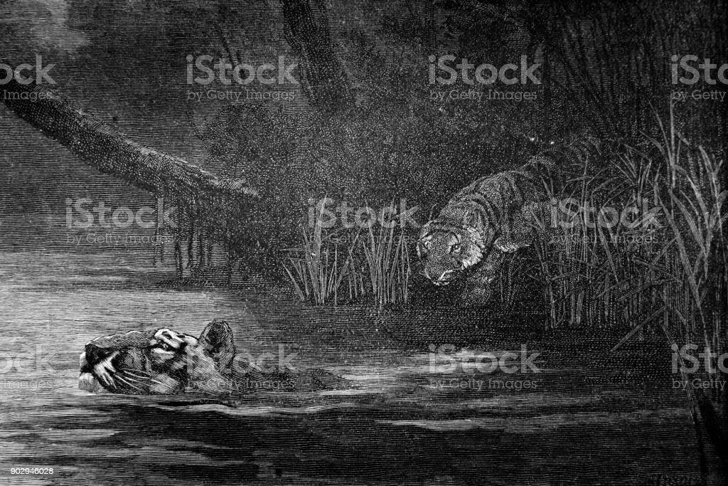 Tiger Swimming Across the Brahmaputra River vector art illustration