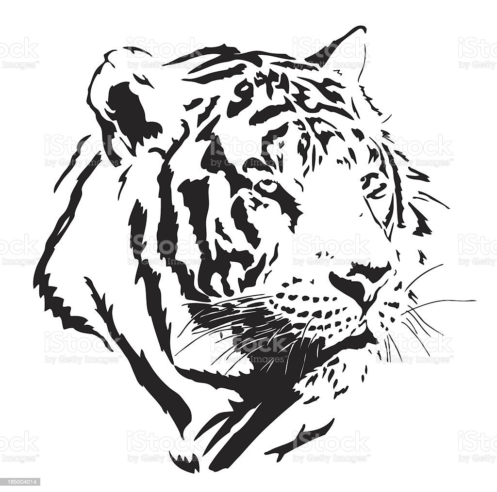 Tiger Vector royalty-free stock vector art