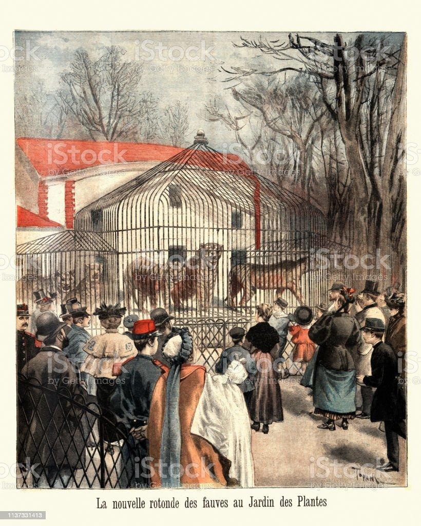 Tiger Im Zoo Jardin Des Plantes Paris 1895 Stock Vektor Art Und Mehr