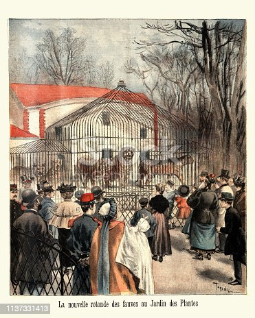 Vintage engraving of  Tigers in cages at the zoo in the  Jardin des Plantes, Paris  (La nouvelle rotonde des fauves au Jardin des Plantes), 1895, 19th century France
