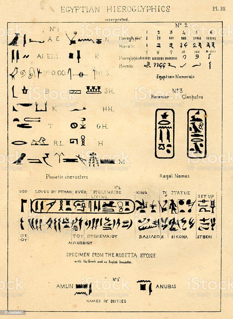 Palaeography Egyptian hieroglyphics interpreted vector art illustration