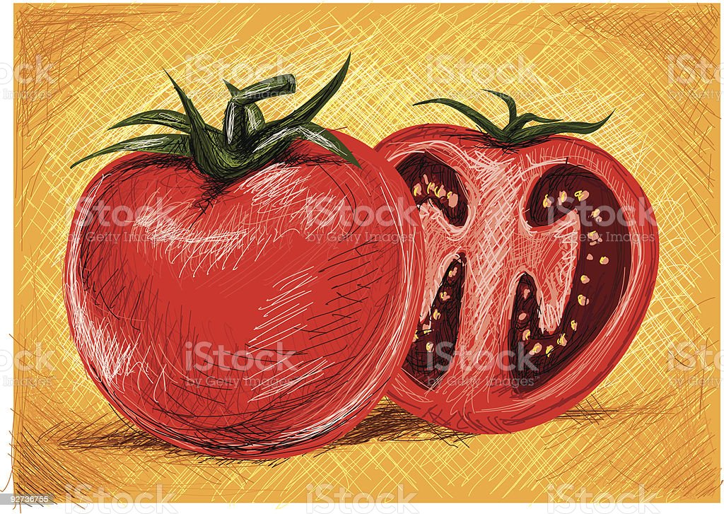 tomato - Royalty-free Color Image stock vector