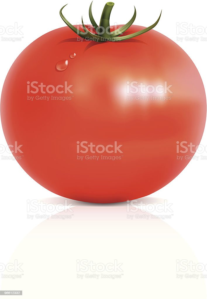 Tomato - Royalty-free Close-up stock vector
