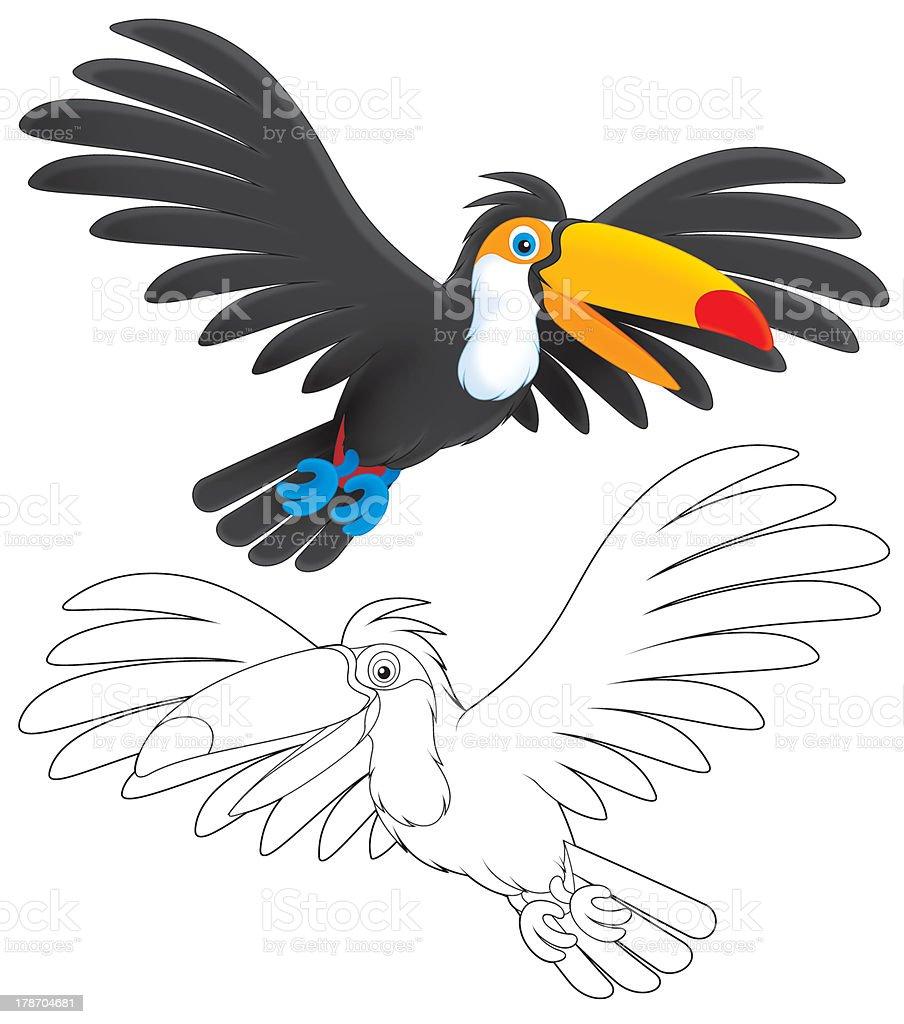 Vetores De Tucano E Mais Imagens De Animal Istock