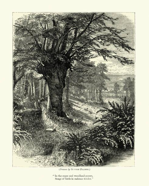 Traditional English Woodland scene, Victorian, 19th Century vector art illustration