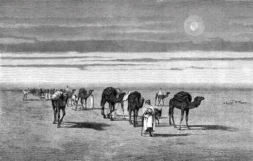 Travel group with camels in the serenity of the Sahara desert