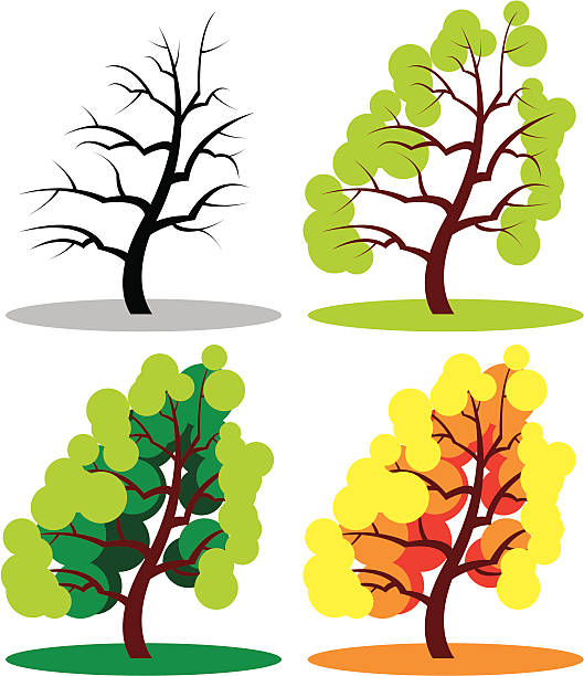 дерево года, 02. - four seasons stock illustrations