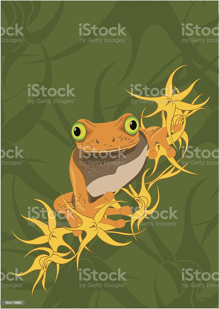 Tree frog royalty-free stock vector art