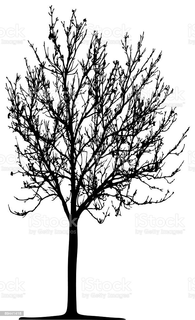 Tree (vector) royalty-free tree stock vector art & more images of branch - plant part