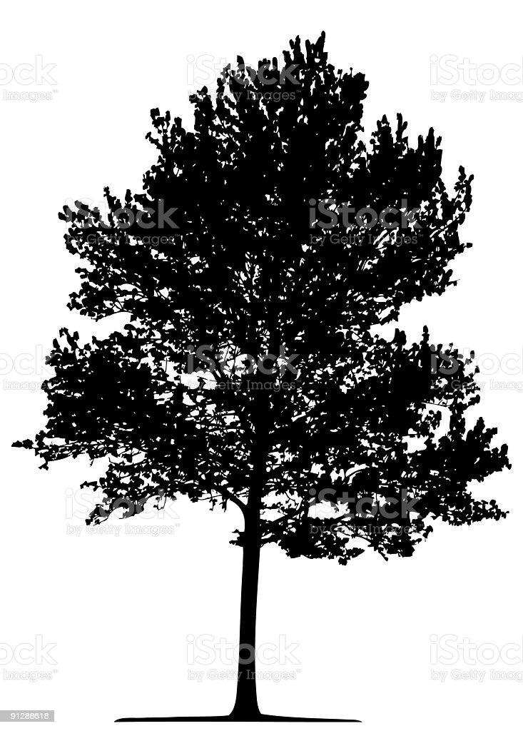 Tree (vector) royalty-free stock vector art