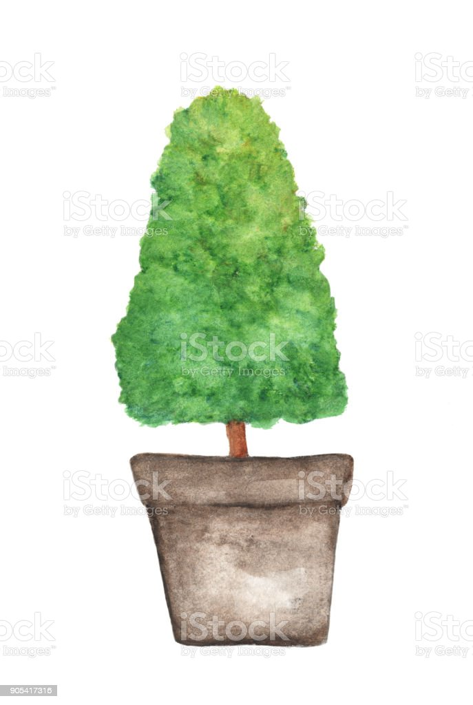 Tree in a pot isolated on white background, Watercolor illustration vector art illustration