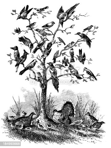 Bare tree, with branches covered in birds
