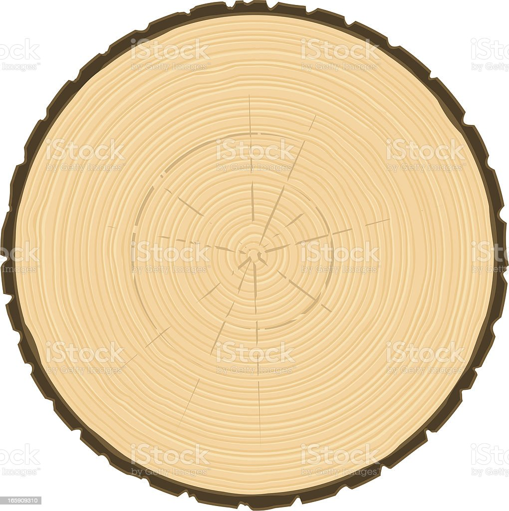 tree ring circle stock vector art more images of aging process rh istockphoto com  illustrator wood grain vector free
