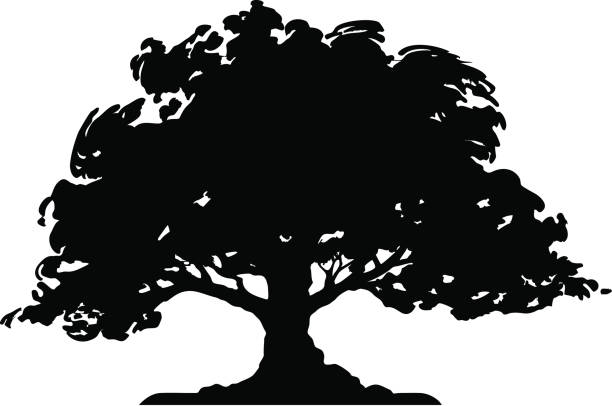 Oak Tree Illustrations, Royalty-Free Vector Graphics ...