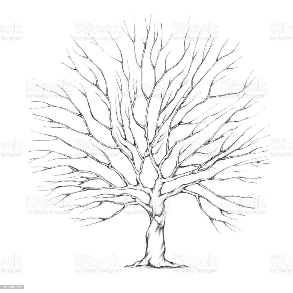 Tree with big tree crown vector art illustration