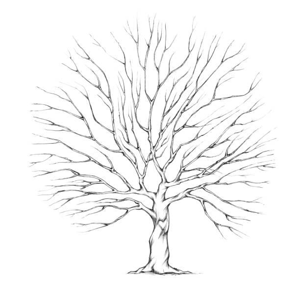 Tree with big tree crown - illustrazione arte vettoriale