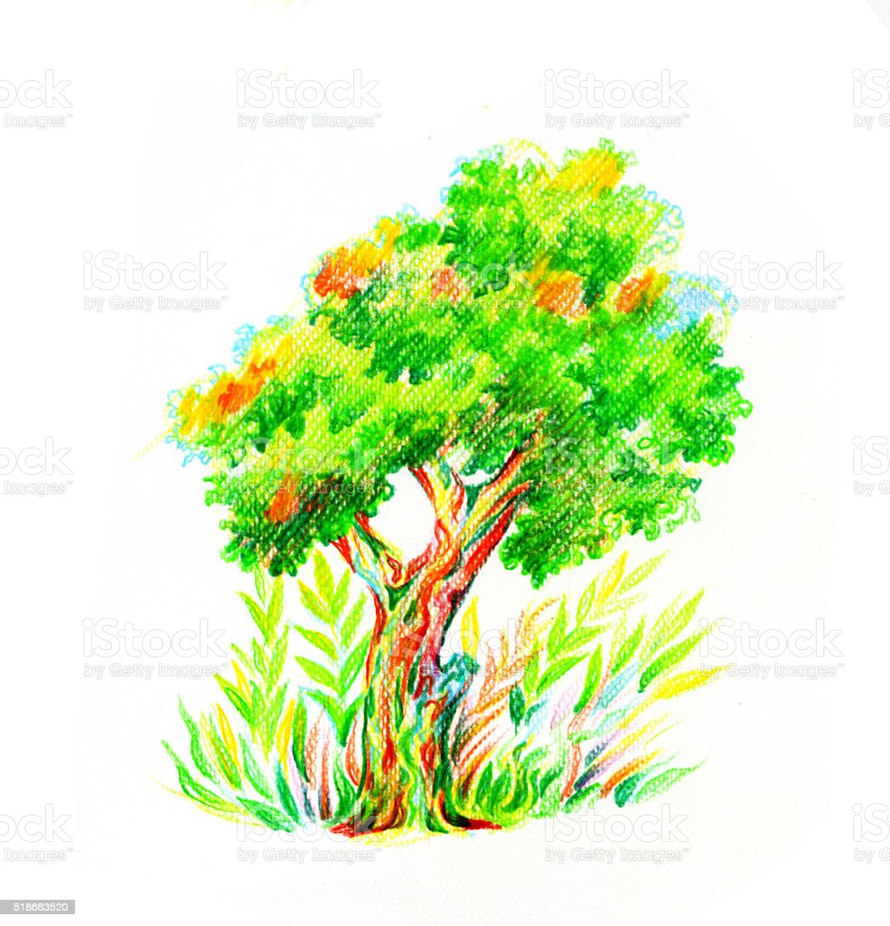 Tree With Bush Drawn By Color Pencil Stock Vector Art & More Images ...