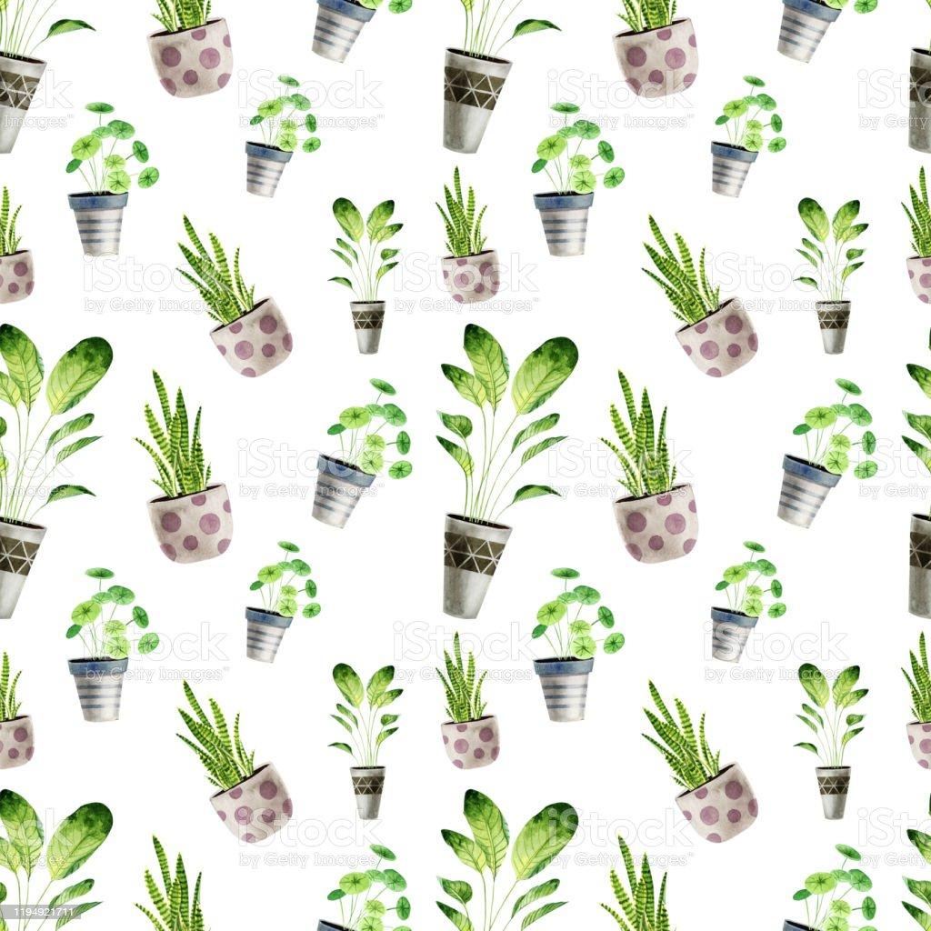 Plante D Intérieur Tendance modèle daquarelle tendance sans couture avec des plantes