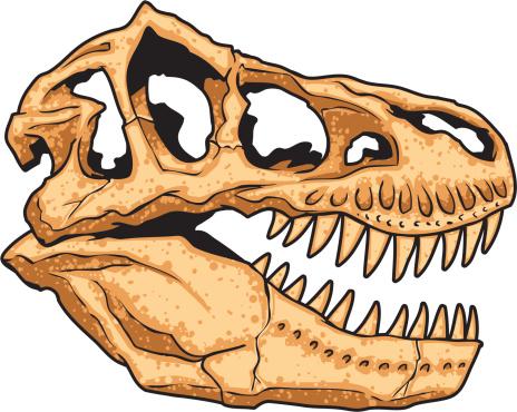 illustration of a tyrannosaurus skull