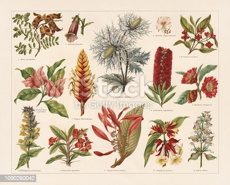Tropic, evergreen, and poisonous plants: 1) Jequirity bean (Abrus precatorius); 2) Purple foxglove (Digitalis purpurea); 3) Alpine sea holly (Eryngium alpinum); 4) Horse-chestnut (Aesculus Hippocastanum); 5) European spindle (Evonymus europaea); 6) Great bougainvillea (Bougainvillea spectabilis); 7) Vriesea (Vriesea Wittmackiana); 8) Callistemon (Callistemon angustifolius); 9) Hong Kong rose (Rhodoleia championii); 10) Melampyrum nemorosum; 11) Euphorbia milii var. splendens; 12) Warszewiczia (Warszewitzia coccinea); 13) Alloplectus peltatus; 14)Clary sage (Salvia sclarea). Chromolithograph, published in 1897.