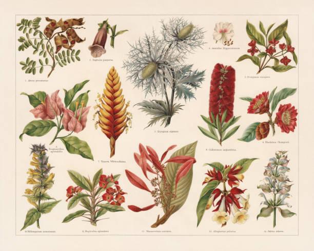 Plantas tropicales, imperecederas y venenosas, cromolitografía, publicadas en 1897 - ilustración de arte vectorial