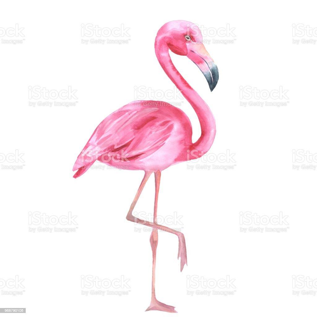 Oiseau Tropical Flamant Rose Dessin Anime 2 Illustration Aquarelle