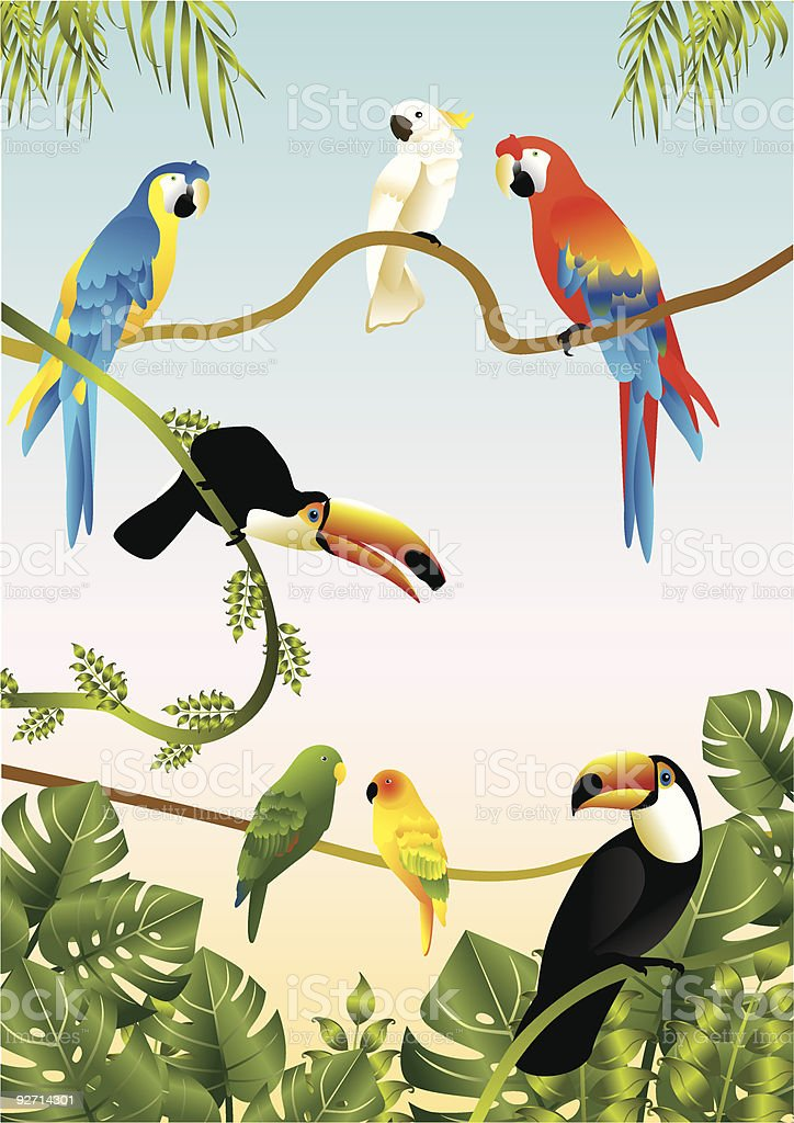 Tropical birds, including parrots, macaws, and toucans vector art illustration