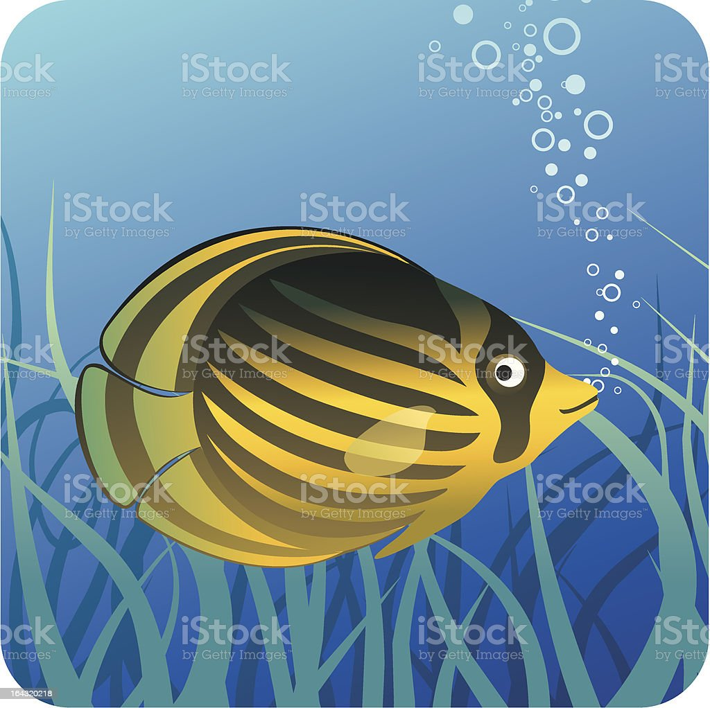 Tropical butterfly fish under water royalty-free stock vector art