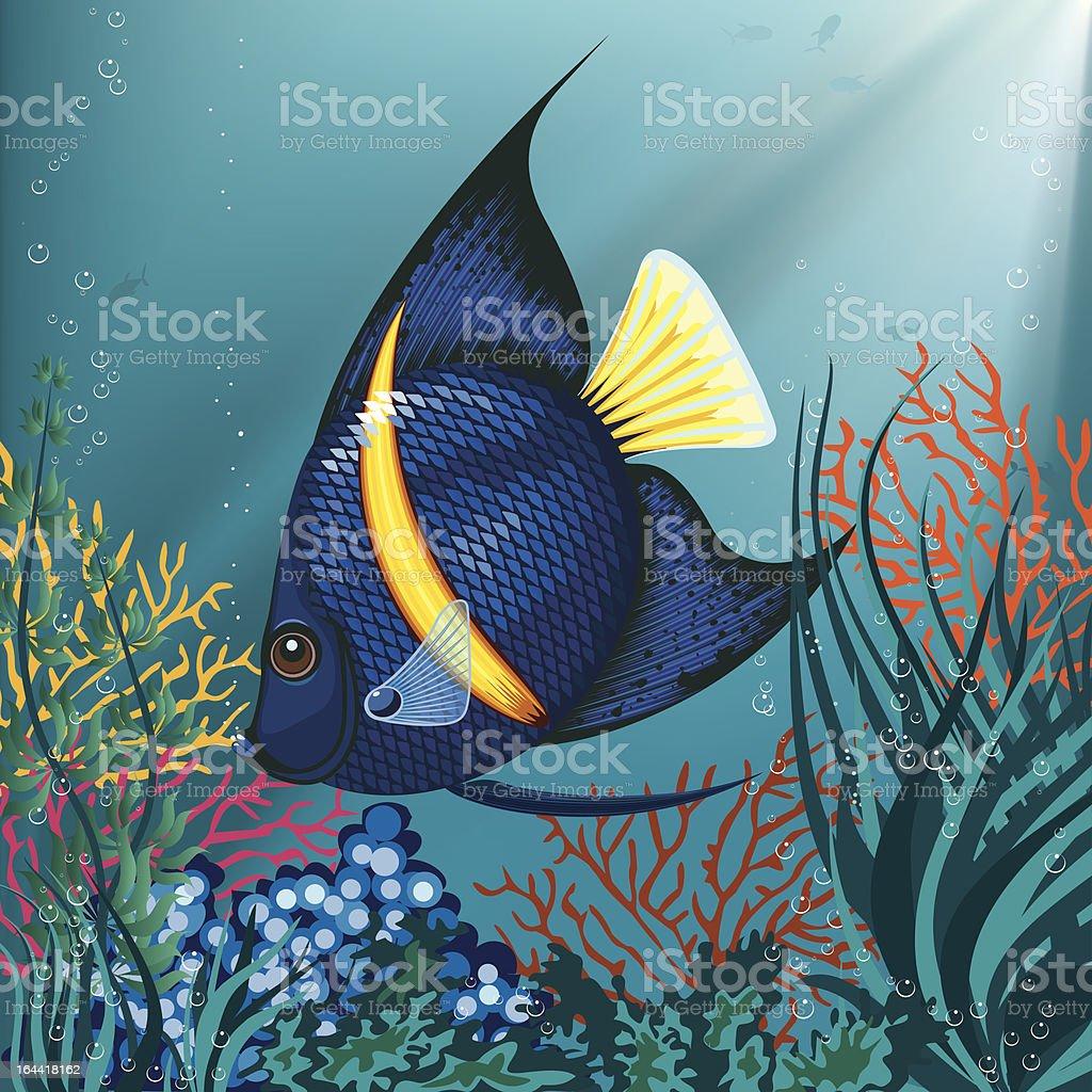 Tropical fish royalty-free tropical fish stock vector art & more images of angelfish