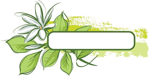 Tropical flower and frame vector art illustration